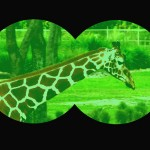 WDW's Night Vision Goggle Safari at the Animal Kingdom Lodge