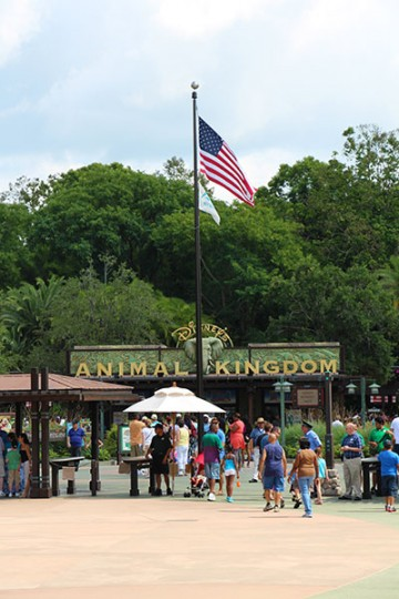 Animal Kingdom American Flag