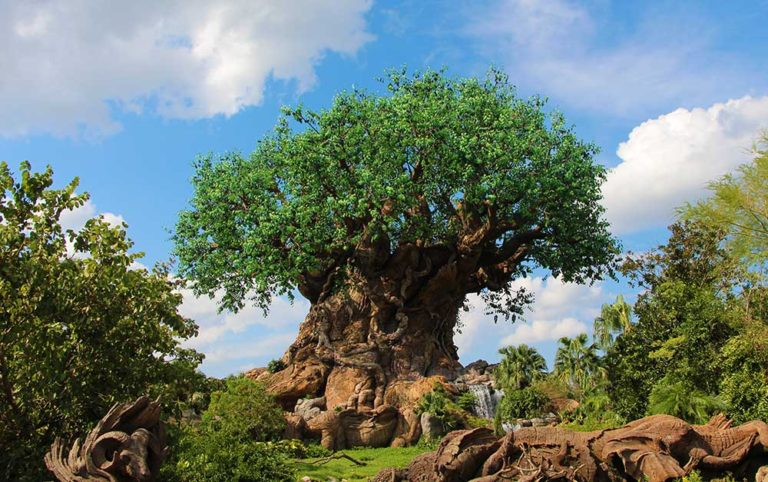 Disney Park Hopping - Animal Kingdom